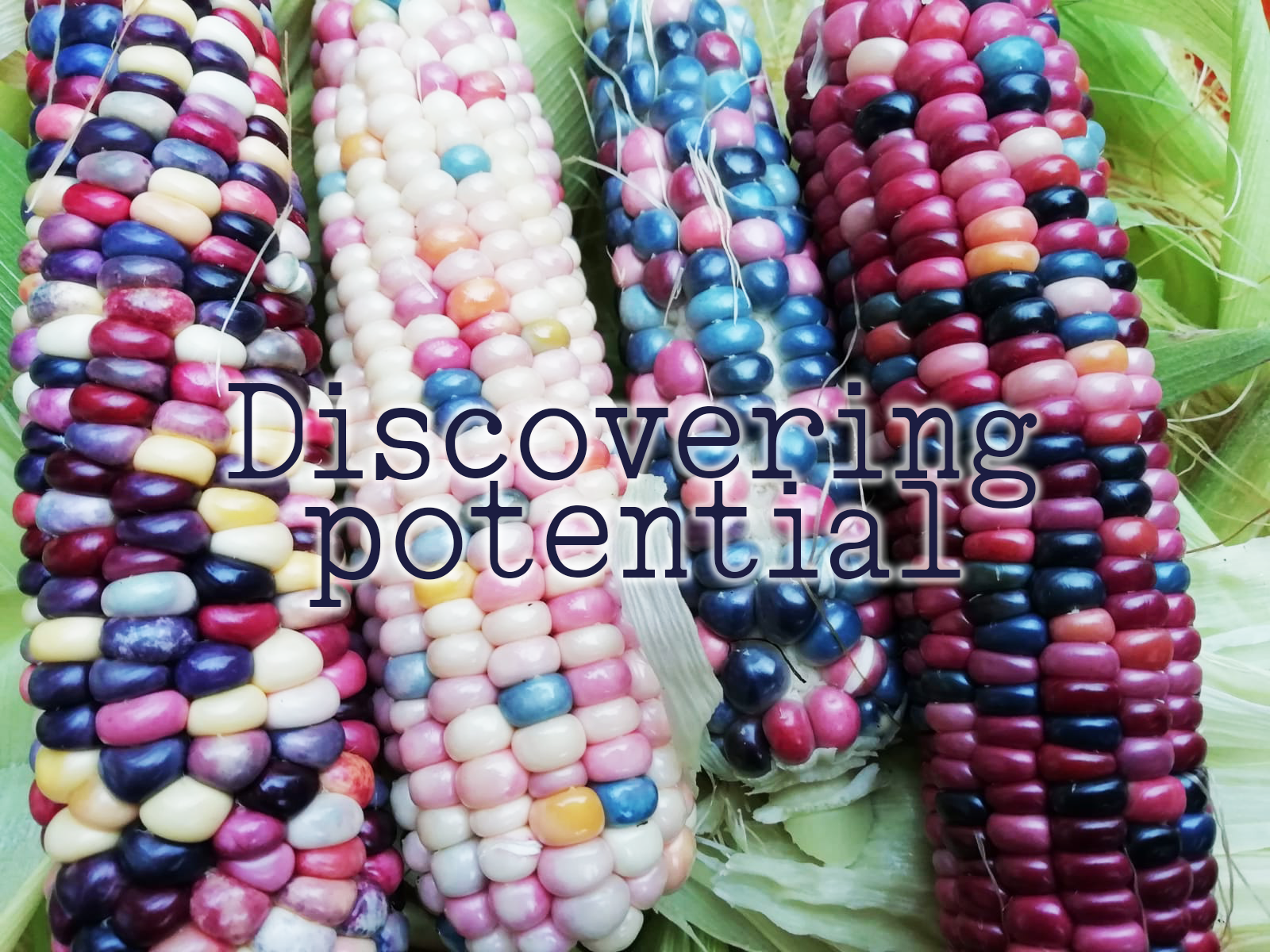 Discovering potential blog cover