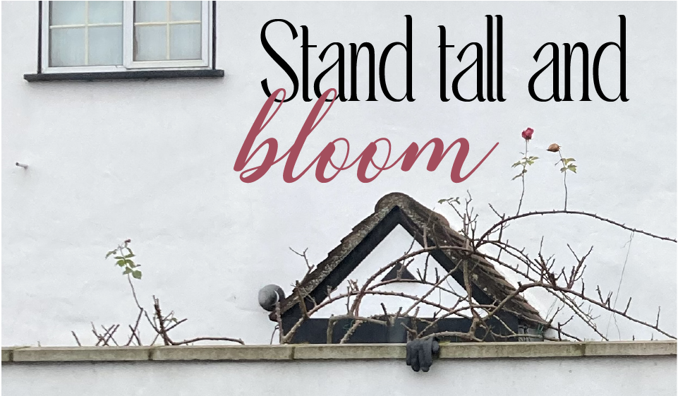 Stand tall and bloom blog cover